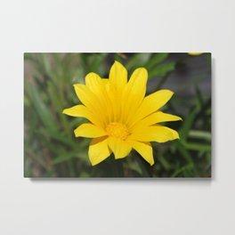 Bright Yellow Gazania Flower Metal Print