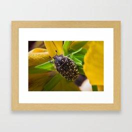 Spotted Bug Framed Art Print