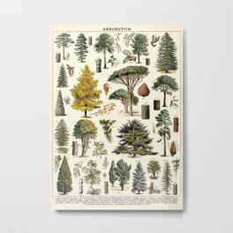 Evergreen Trees Vintage Scientific Illustration Encyclopedia Labeled Diagrams Metal Print