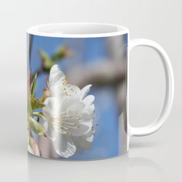 Cherry Blossom In Spring Sunlight Coffee Mug