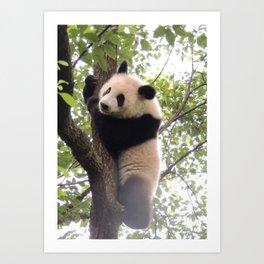 Chongqing Baby Giant Panda | Bébé Panda géant Art Print
