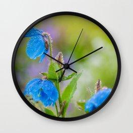 Himalayan Blue Poppies, after the rain Wall Clock
