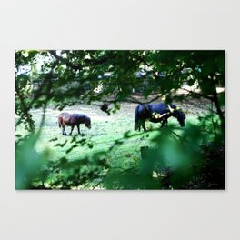 Pasture Through the Wood Canvas Print