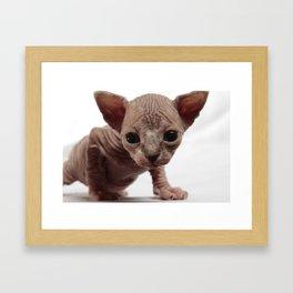 Freaky Cute Furless Sphynx Kitten Framed Art Print