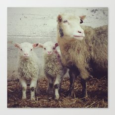 Sheep #1 Canvas Print