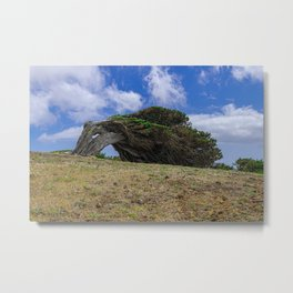 Phoenicean juniper Metal Print