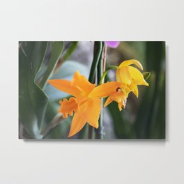 Longwood Gardens Orchid Extravaganza 71 Metal Print