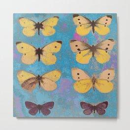 Butterflies on display Metal Print