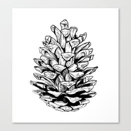 Pine cone illustration Canvas Print