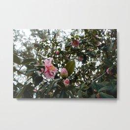 Savannah is blooming, pt.2 Metal Print