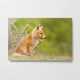 The Cute Fox Kit (Red Fox Cub) Metal Print
