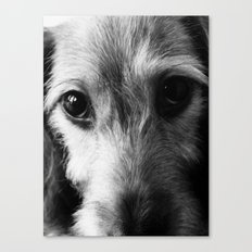 Puppy Love - Dachshund, Doxie, Dog, Pet, Pet Lover, Doxies, Eyes, Black & White Photography Canvas Print
