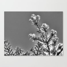 silver sprigs Canvas Print
