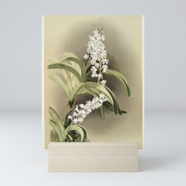 Saccolabium cleste from Reichenbachia Orchids (1888-1894) illustrated by Frederick Sander (1847-1920 Mini Art Print