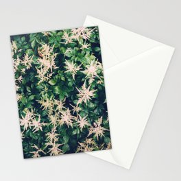 Astilbe From Above Stationery Cards