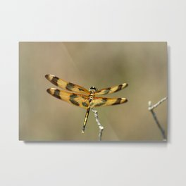 Golden Dragonfly Metal Print