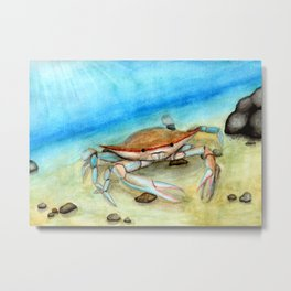 Chesapeake Bay Blue Crab Metal Print