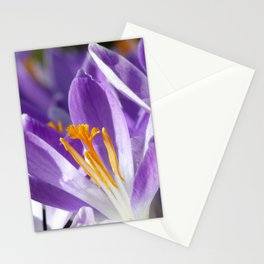 Violet spring crocus Stationery Cards