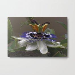 Side View of Beautiful Passiflora Flower Metal Print