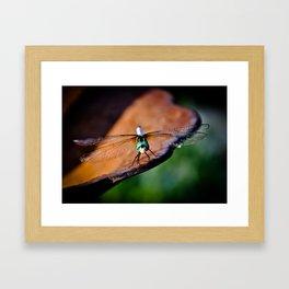 Dragonfly....smile Framed Art Print