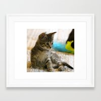 kitten Framed Art Prints featuring Kitten by Veronica Ventress