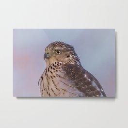 Watercolor Falcon Metal Print