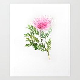 Calliandra Art Print
