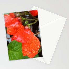 Autumn plants Stationery Cards