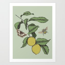 Lemons in Spring Art Print