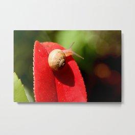 Snail on red leaf Metal Print