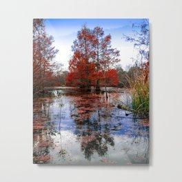 Pondcypress in Autumn Metal Print