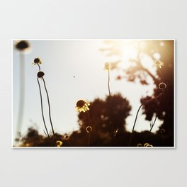 Looking Into The Sun Canvas Print
