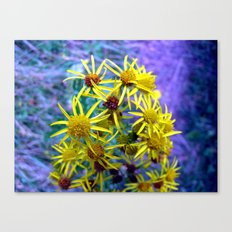 flower II. Canvas Print
