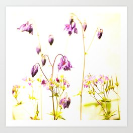 Purple Columbine By The Wall Art Print