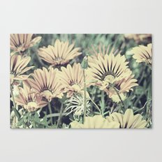 Desert Daisies - Daisy Project in memory of Mackenzie Canvas Print