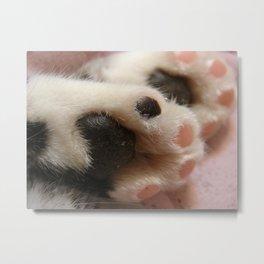 Kitty Paws Metal Print