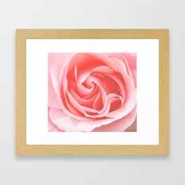 Velvet pink rose - Roses Flowers Flower Framed Art Print