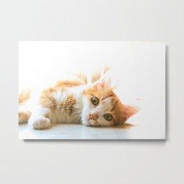Tippy cat Metal Print