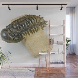 Cheirurus Trilobite Fossil Wall Mural