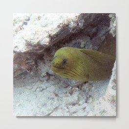 Watercolor Eel, Green Moray Eel 04, St John, USVI Metal Print