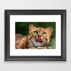 RUSTY SPOTTED CAT LICK Framed Art Print