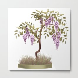 Wisteria . Tree . Metal Print