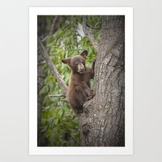 Black Bear Cub Hanging On Art Print
