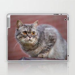 British shorthair cat on the wall Laptop & iPad Skin