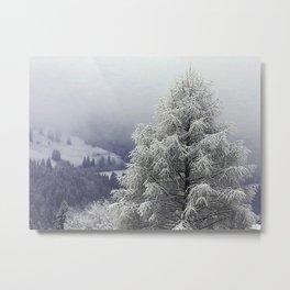 Frosty morning Pine tree Metal Print