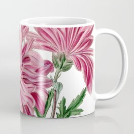 Light Purple Chrysanthemum / W. Curtis 1857 Coffee Mug