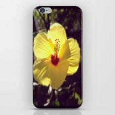 Summertime Flower iPhone & iPod Skin