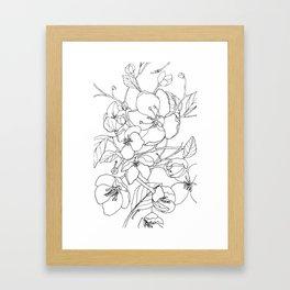 Crabapple Blossoming Framed Art Print