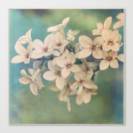 She Has That Effect Canvas Print
