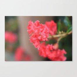 Hot Pink in Bloom Canvas Print